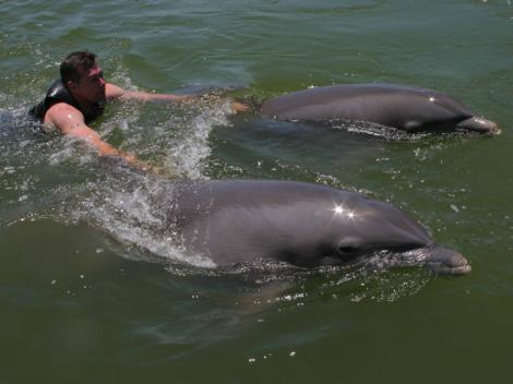 2-Day Swim with Dolphins South Beach