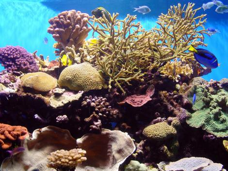 Go San Diego Card aquarium