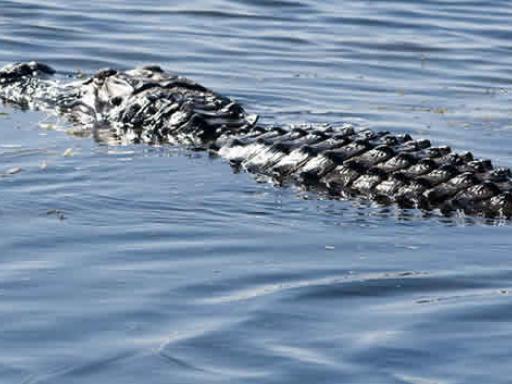 Boggy Creek Orlando Airboat Rides