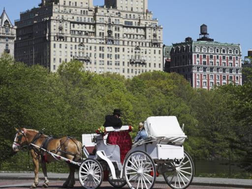 Central Park Horse and Carriage Tour