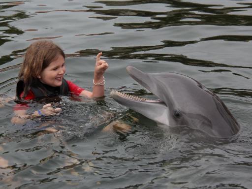 Dolphin Swim Miami