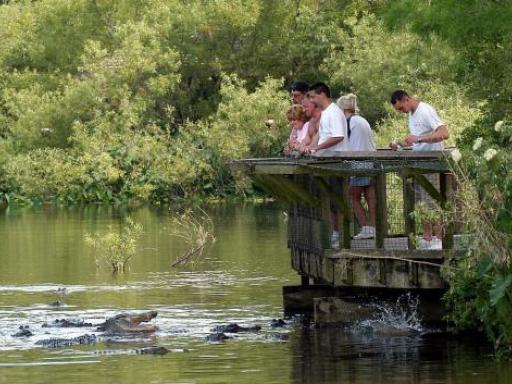 Gatorland & Airboat Safari