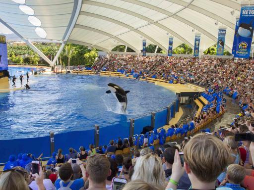 Orcas - Loro Parque