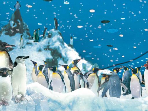 Penguins - Loro Parque Tickets