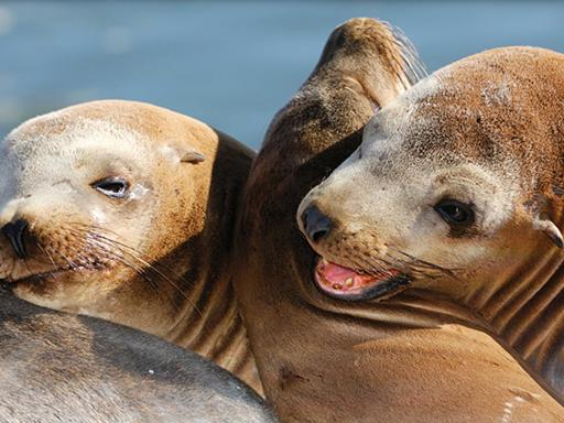 San Diego Harbour Cruise & Sea Lion Adventure