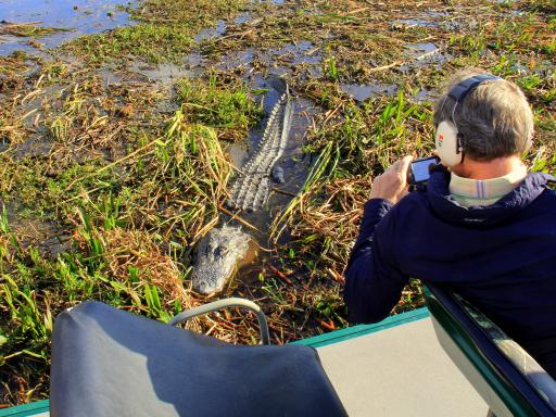 Wild About Florida - Airboat Gator