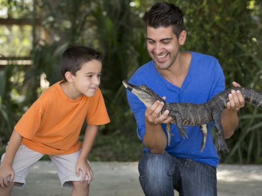 Wild About Florida - Wild Florida