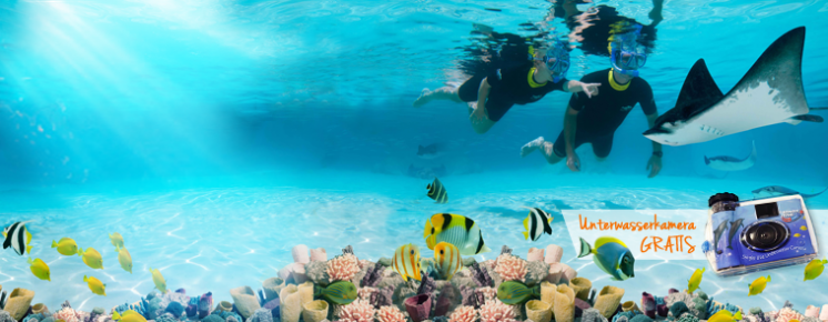 Discovery Cove Ultimate Ticket ab €205