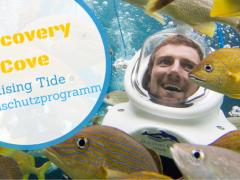 Discovery Cove: Schwimmen für den guten Zweck