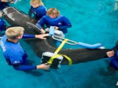 Aktuelles vom SeaWorld & Busch Gardens Conservation Fund