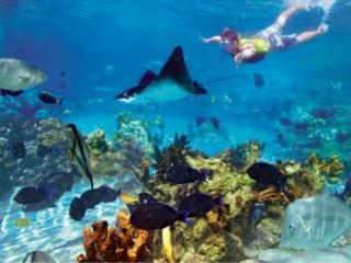 7 Dinge, die gratis in Ihrem Discovery Cove Ticket enthalten sind