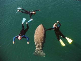 Florida Adventure Tour – Swim with Manatees