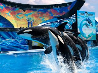 SeaWorld Signature Show Seating Ticket