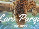 Loro Parque Teneriffa: 5 Highlights, die Sie nicht verpassen sollten!