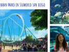 Bald in SeaWorld San Diego: Kalifornien's schnellste Achterbahn