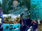 Aufregende Zeit in den SeaWorld Parks  Aufregende Zeit in den SeaWorld Parks
